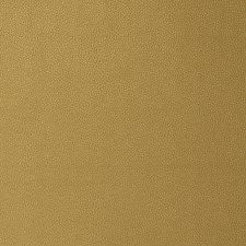 Gold Solid Decorator Fabric by Stroheim