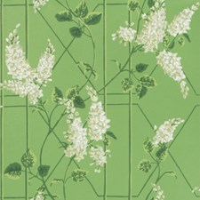 Sage/Leaf Green Print Wallcovering by Cole & Son Wallpaper