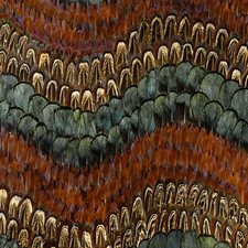 Peacock/Pheasant Wallcovering by Schumacher Wallpaper