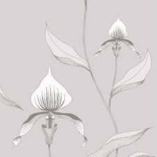 Grey/White Botanical Wallcovering by Cole & Son Wallpaper