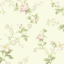 Cream/Pale Pink/Peach Pink Floral Medium Wallcovering by York