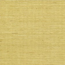 Citrine Solid Wallcovering by Winfield Thybony